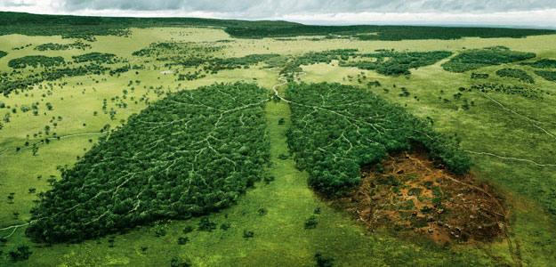 Vegetacion, arboles el pulmon del mundo